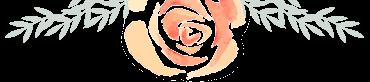 Flores Contacto